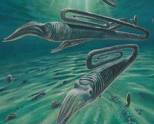 Ataç benzeri deniz yaratığının 200 yıl yaşayabildiği keşfedildi