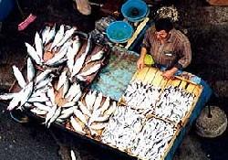 Soğuklar balık fiyatlarını uçurdu