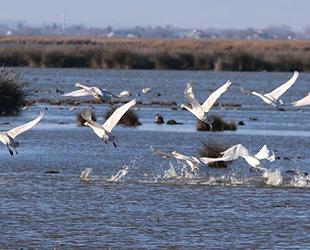 Kuş Cenneti, kaçak avcıların hedefi haline geldi