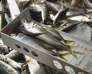 İstanbul'da yapılan denetimlerde 1 ton balığa el konuldu