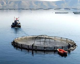 Fırat Nehri'nde Mersin balığı yetiştirilecek