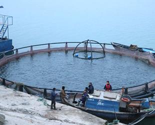 Fırat Nehri'nde yılda 10 milyon balık üretiliyor