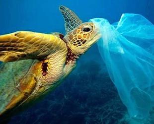 Her iki deniz kaplumbağasından biri plastik yutuyor