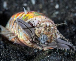 Denizaltında gizlenen yırtıcı solucanlar ortaya çıktı