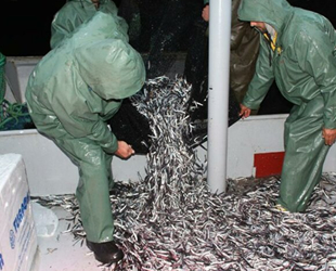 Hamsi fiyatı denizden tezgaha kadar 3'e katlanıyor