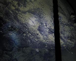 Antarktika'da 900 metre derinde tesadüfen yeni yaşam formu keşfedildi