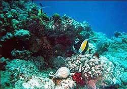 Denizin altında ne ararsan var!