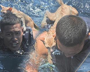 Taylandlı denizci, yanan teknede mahsur kalan 4 kediyi sırtında taşıyarak kurtardı