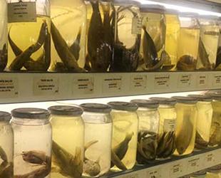 İstanbul'daki 'Balık Müzesi'nde 450 tür sergileniyor