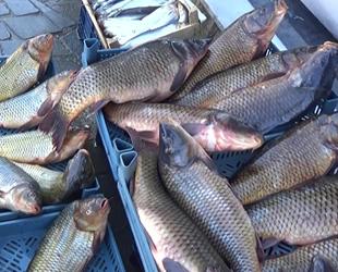 Mart ayının en lezzetli balığı sazan oldu