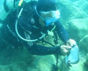 Mehmet Gökoğlu, vatoz balığının elektrikli şokuna maruz kaldı