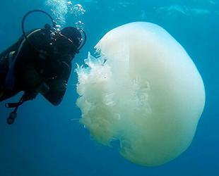 Antalya Körfezi'ni denizanaları istila etti