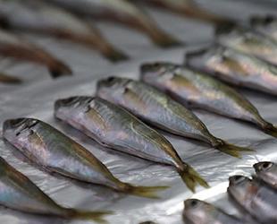 Balık türlerinde mikroplastik tüketimi tespit edildi
