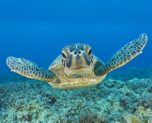 Madagaskar'da deniz kaplumbağası yiyen 19 kişi öldü