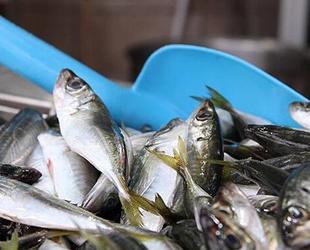 Deniz salyası tezgahlardaki balık fiyatlarını yükseltiyor