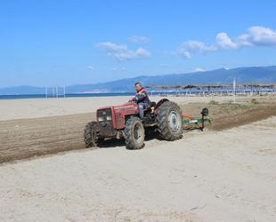 Burhaniye'de plajlar düzenleniyor