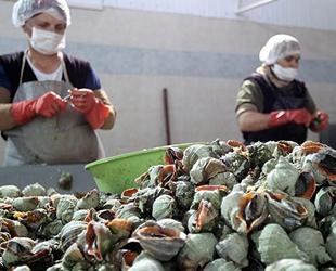 Türkiye'den yılın ilk iki ayında 2.7 milyon dolarlık deniz salyangozu ihraç edildi