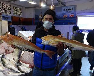Karadeniz'de kırlangıç ve kalkan balığı bereketi yaşanıyor