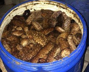 Deniz patlıcanı avcılığı 15 Nisan'da sona eriyor