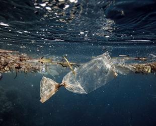 İklim değişikliği ve çevre kirliliği, denizlerdeki canlı türlerini yok ediyor