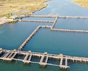 Muğla'dan 67 ülkeye balık ihracatı gerçekleştirildi
