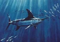 İsrailli balıkçıya kılıçbalıkları saldırdı