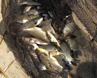 Söke'de iç sularda yasak balık avı denetimleri sürüyor