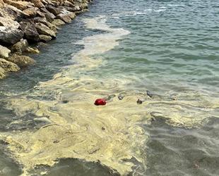 Mersin'de deniz yüzeyinde sarı tabaka oluştu