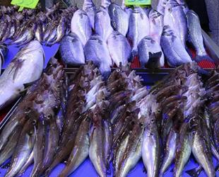Balıkçı esnafı yüksek fiyatlardan şikâyet ediyor