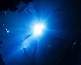 Derin denizde 'görünmez bakteri' keşfedildi