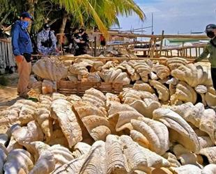 Filipinler'de 25 milyon dolar değerinde yasa dışı midye kabukları ele geçirildi