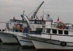 Ürkmez'e balıkçı barınağı müjdesi