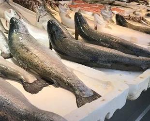 Birleşmiş Milletler, 2022'yi Balıkçılık ve Su Ürünleri Yılı ilan etti