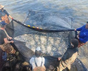 İznik Gölü'nde gümüş balığı rekoru kırıldı