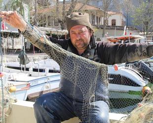 Sinoplu balıkçılar, yunuslardan dert yanıyor