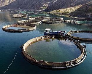 DSİ, baraj gölleriyle balık üretimine katkı sağlıyor