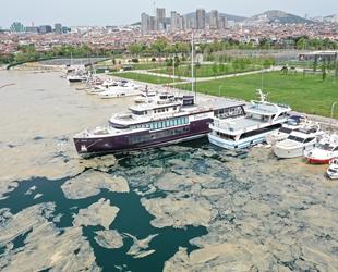 İstanbul'da deniz yüzeyinde oluşan beyaz tabaka kıyıya vurdu