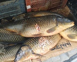 Eğirdir Gölü'nde kaçak avcılığa 5 bin 455 lira ceza kesildi