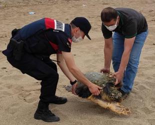 Adana'da yaralı bulunan caretta caretta tedavi altına alındı