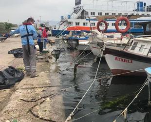 İzmir Körfezi'ndeki deniz marulları temizleniyor