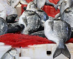 Balık satışları azaldı, fiyatlar düştü