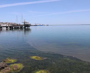 Samsun Limanı'ndaki kirlilik tedirginlik yarattı