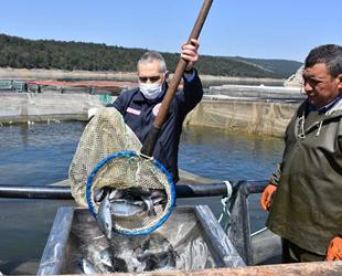 Manisa, su ürünlerinden önemli gelir elde ediyor