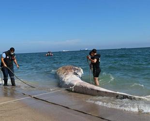 Mersin'de kıyıya vuran balinanın ölüm nedeni belli oldu