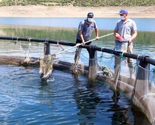 Çekerek Barajı'nda yıllık 60 ton balık üretiliyor
