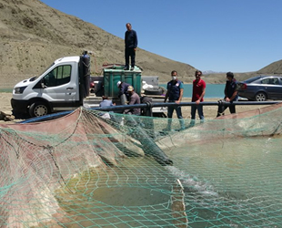 Van'da 1.3 milyon yavru balık suyla buluştu