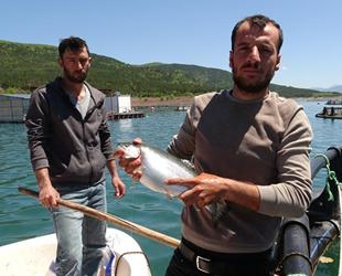 Almus Baraj Gölü'nde yılda 5.5 ton balık üretiliyor
