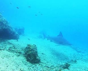 Kum köpek balıkları 24 saat izleniyor