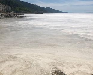 Marmara'daki deniz salyası, doğal yaşam için tehlike oluşturuyor