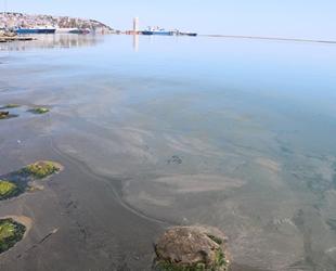 Samsun Limanı'ndaki kirliliğin nedeni ortaya çıktı